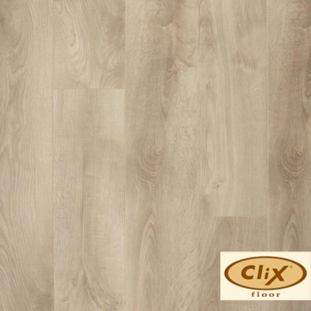 Дуб Гастония CXI 151